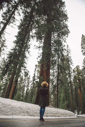 Casual Clothing Curly Hair Day Forest Full Length Girl Leisure Activity Lifestyles Mountain Nature One Person Real People Rear View Road Road Road Trip Sequoia Sequoia National Park Snow Snowing Tree Tree Tree Trunk Trees Walking