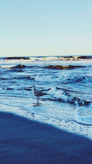 Bird Watching Beach Nature Beauty In Nature Animals In The Wild Wave Horizon Over Water Animal Themes Bird Sky Day