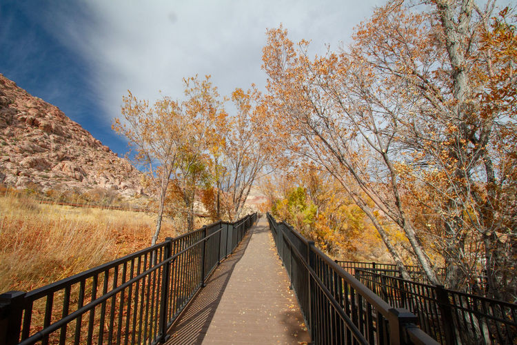 Footbridge amidst trees against sky during orange autumn cottonwood trees. red rock canyon, nevada