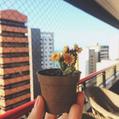 Cropped Image Of Hand Holding Small Cactus Plant By Window At Home