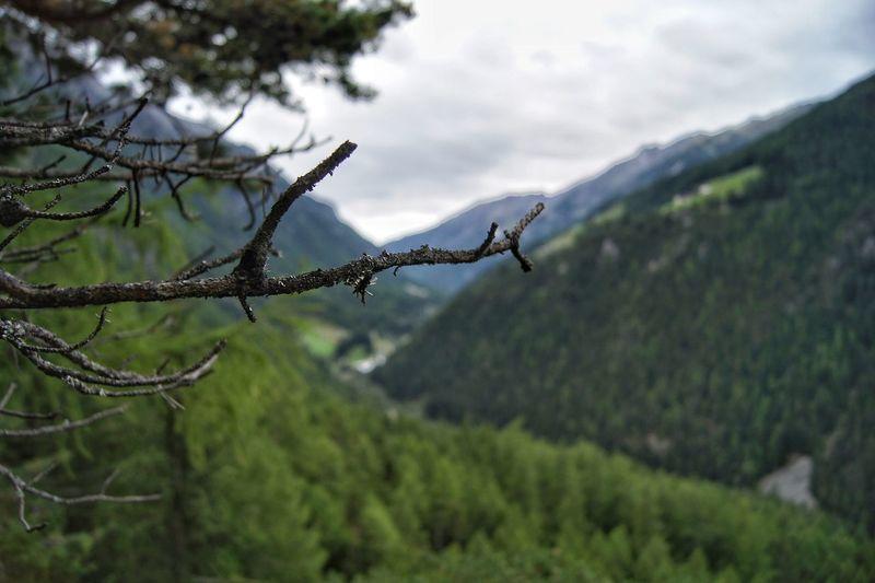 Alpine Alps