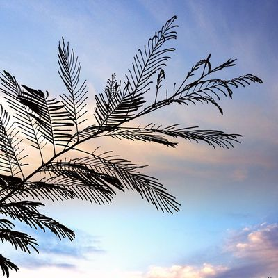 A little bit of formosa tree. Sky Nature Low Angle View Tree Day Outdoors No People Leaf Blue Flying Beauty In Nature Bird