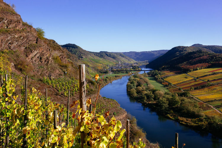 Scenics - Nature Beauty In Nature Mountain Landscape River Blue Idyllic Clear Sky Outdoors Environment Tranquil Scene Water Vine Vineyard Vine - Plant Vineyards  Mosel Mosel River In Germany Mosel Valley Moseltal Aerial View Autumn Autumn🍁🍁🍁 Autumn colors