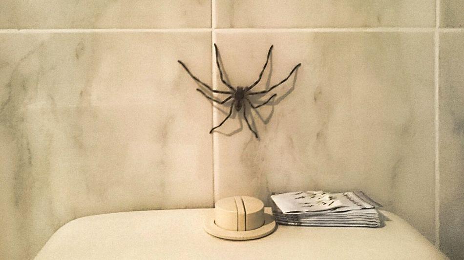 Bathroom Spider HuntsmanSpider