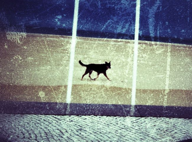 Grunge Dog - Grunge Happy Dog Beach Nazaré  Playing With Filters Portugal Keepmoving