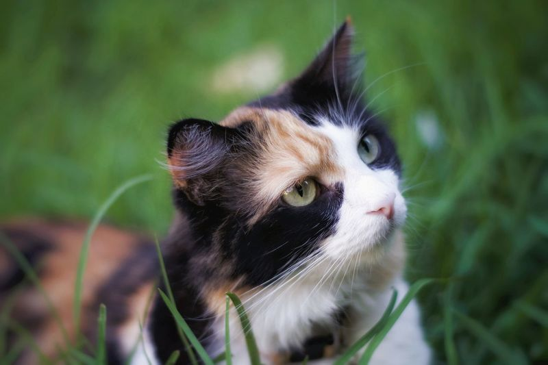 The day in the life of Nancy. Calico Calico Cat EyeEm Selects Pets Kitten Portrait Feline Domestic Cat Cute Ear Whisker Young Animal Looking At Camera Paw Animal Eye HEAD Cat At Home