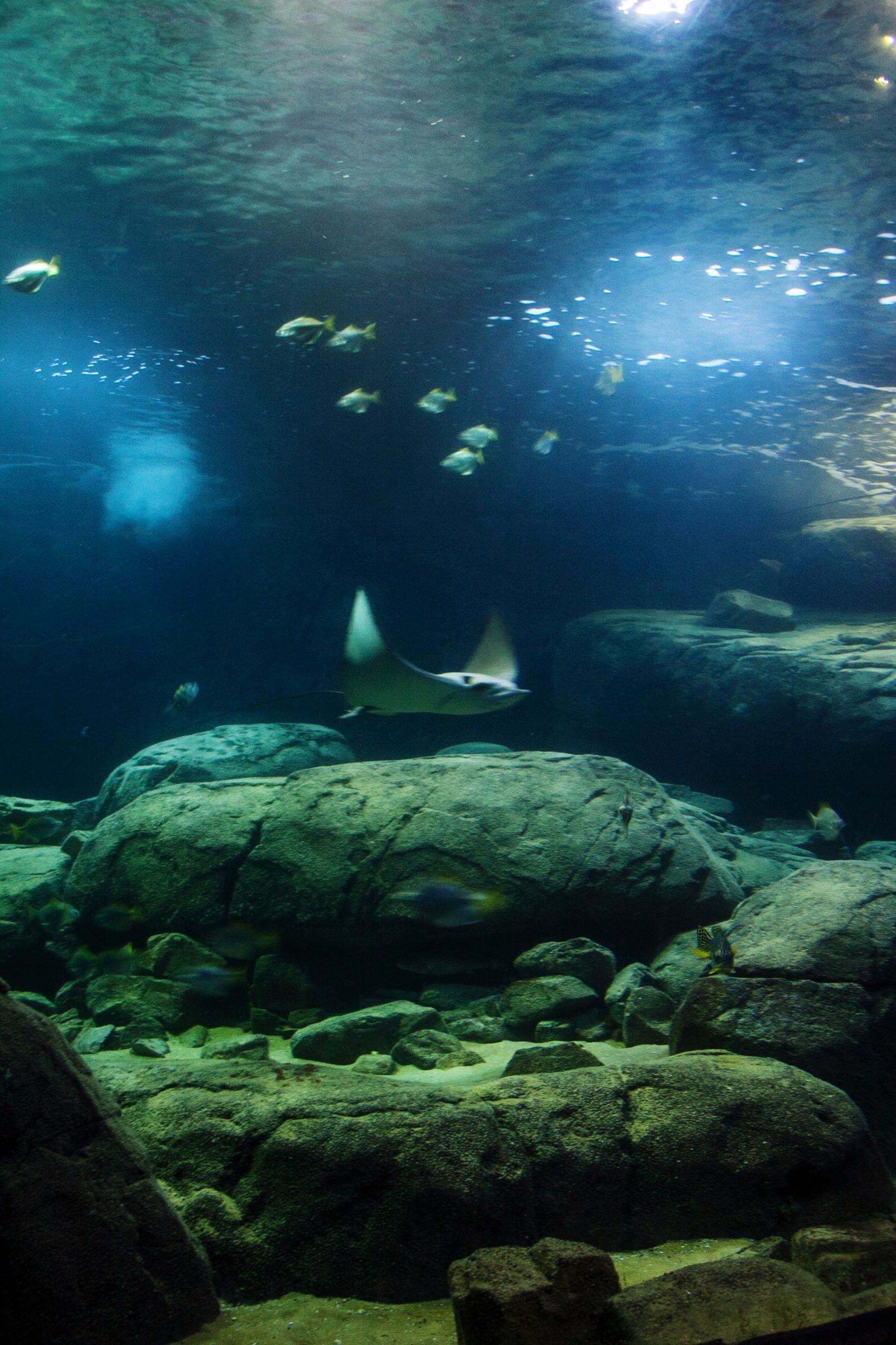 water, animal themes, rock - object, animals in the wild, swimming, wildlife, underwater, high angle view, nature, one animal, sea, sunlight, full length, rock, day, outdoors, men, fish
