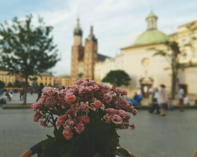 Flowers Pink Cracow Mainsquare Beautiful EyeEm Best Shots EyeEmBestPics Photography Samsung Galaxy S7