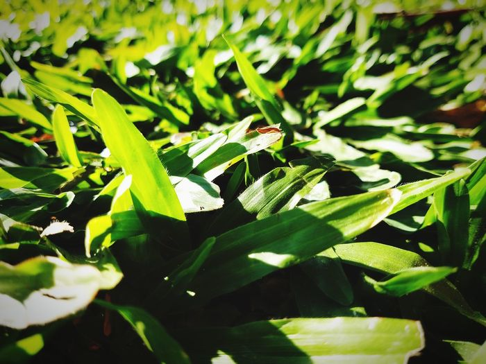 Green Village Leaf Sunlight Close-up Plant Green Color