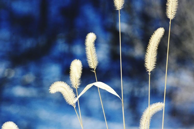EyeEm Selects blue background and winter grass Outdoors No People Day Close-up Flower Nature Sky Freshness Galena, Illinois Room For Copy Copy Space Bradleywarren Photography Bradley Olson Blue Blue Color Backgrounds Background Graphic Design Graphics Wallpaper Environmental Issues Full Frame Grassy Grass EyeEm Ready