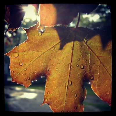 Going a little nutso uploading photos I took ages ago... Instagram you're giving them new life! Sunlight Raindrops Leaf Leaves Autumn Fall