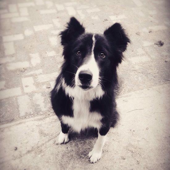 der Hund von meiner Tante ?sie heißt Tara ❤️ Hund Dogs