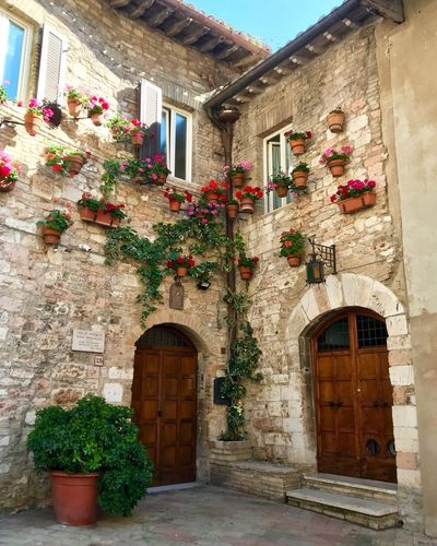 In Assisi Built Structure Architecture Building Exterior Plant Building Window Decoration Day Growth Nature No People Potted Plant Flower Residential District Flowering Plant House Wall - Building Feature Wall Entrance Outdoors