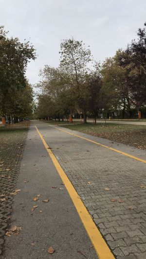 Tree Plant Road Sky Direction Symbol The Way Forward