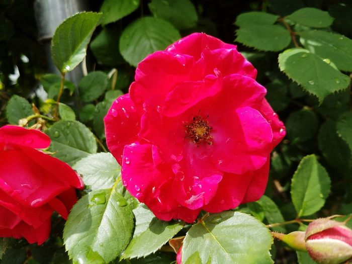 Flower Pretty