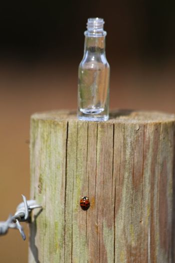 They call me the Wanderer... Bottle Ladybird Wood - Material Close-up No People Invertebrate Animal Wildlife Container Table Animal Themes Focus On Foreground Insect Fence Food And Drink Barrier Day Outdoors
