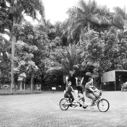 kring kring gowes gowes Blackandwhite Photography Trees And Sky Monochrome Popular Photos