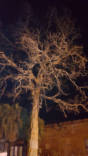 Night photography of an tree without leaves Outdoors Night Tree No People Sky Nightphotography Nikonphotography Nikon Photography Hellow World Eyeem Photography EyeEm Vision Eyeemphotography EyeEm Gallery EyeEm Eyeem Market NIKON D5300 EyeEm Nature Lover Black Background No Leaves Tree No Leaves On Tree Nature
