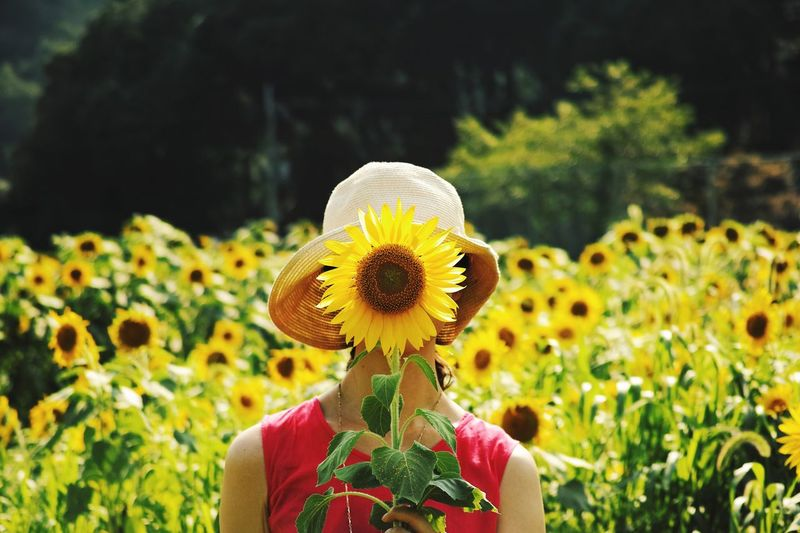 Front View Of Girl Holding Fresh Sunflower In Front Of Face On Field