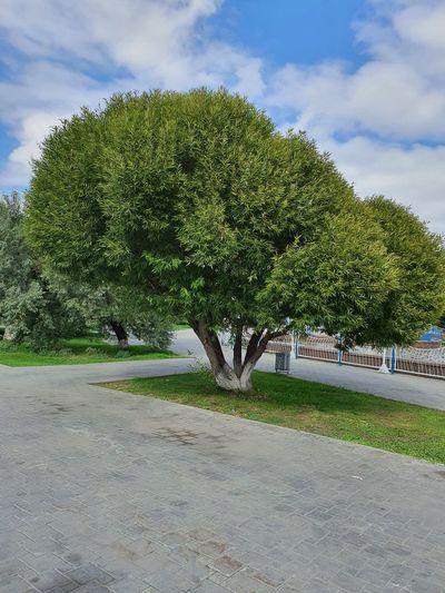 Trees growing by road in park against sky