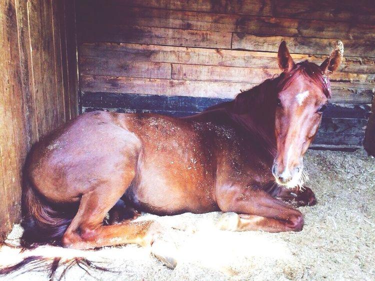 Конь мой😎💓 Кони