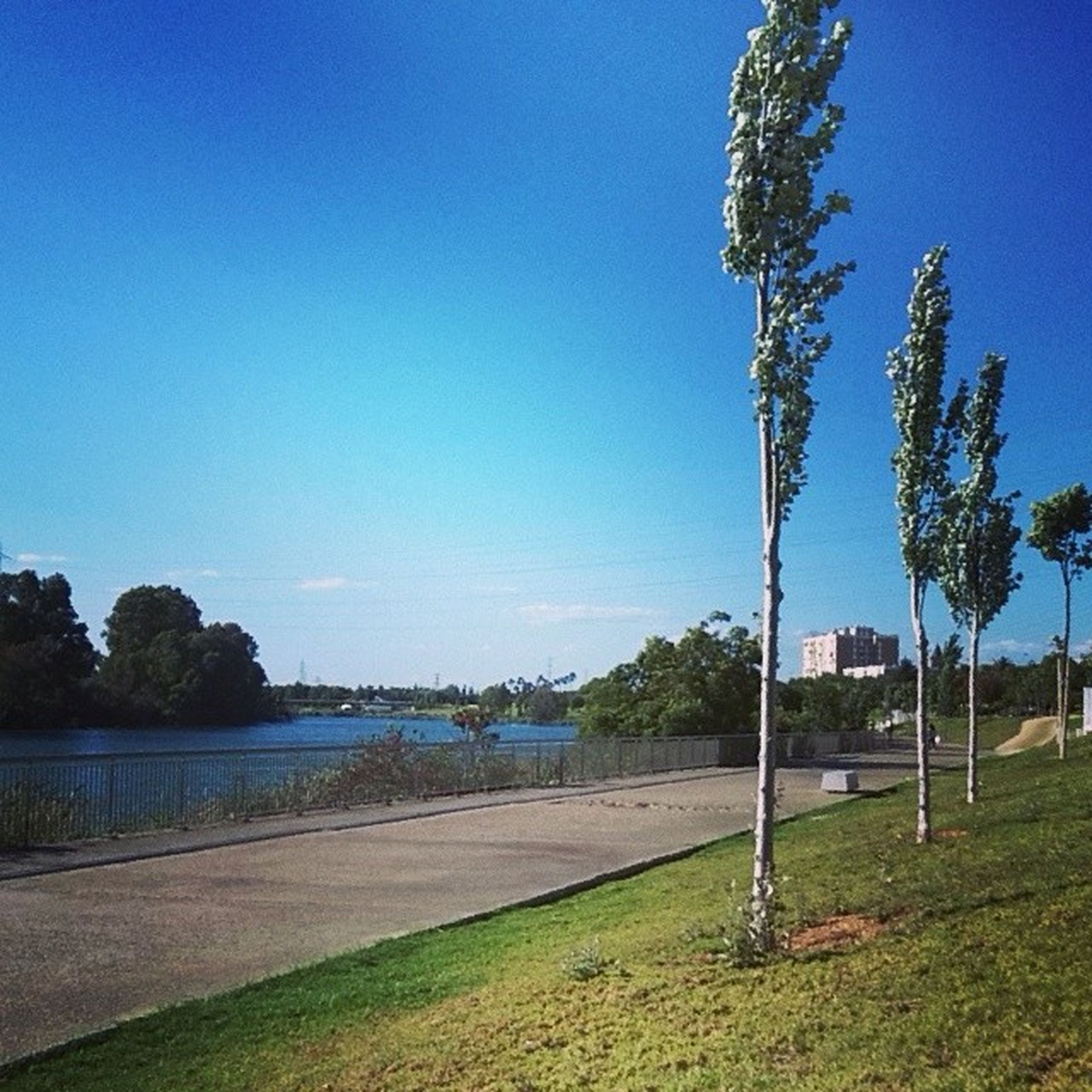 blue, clear sky, tree, copy space, water, tranquility, tranquil scene, sky, grass, nature, road, scenics, sunlight, beauty in nature, outdoors, shadow, sea, growth, day, river