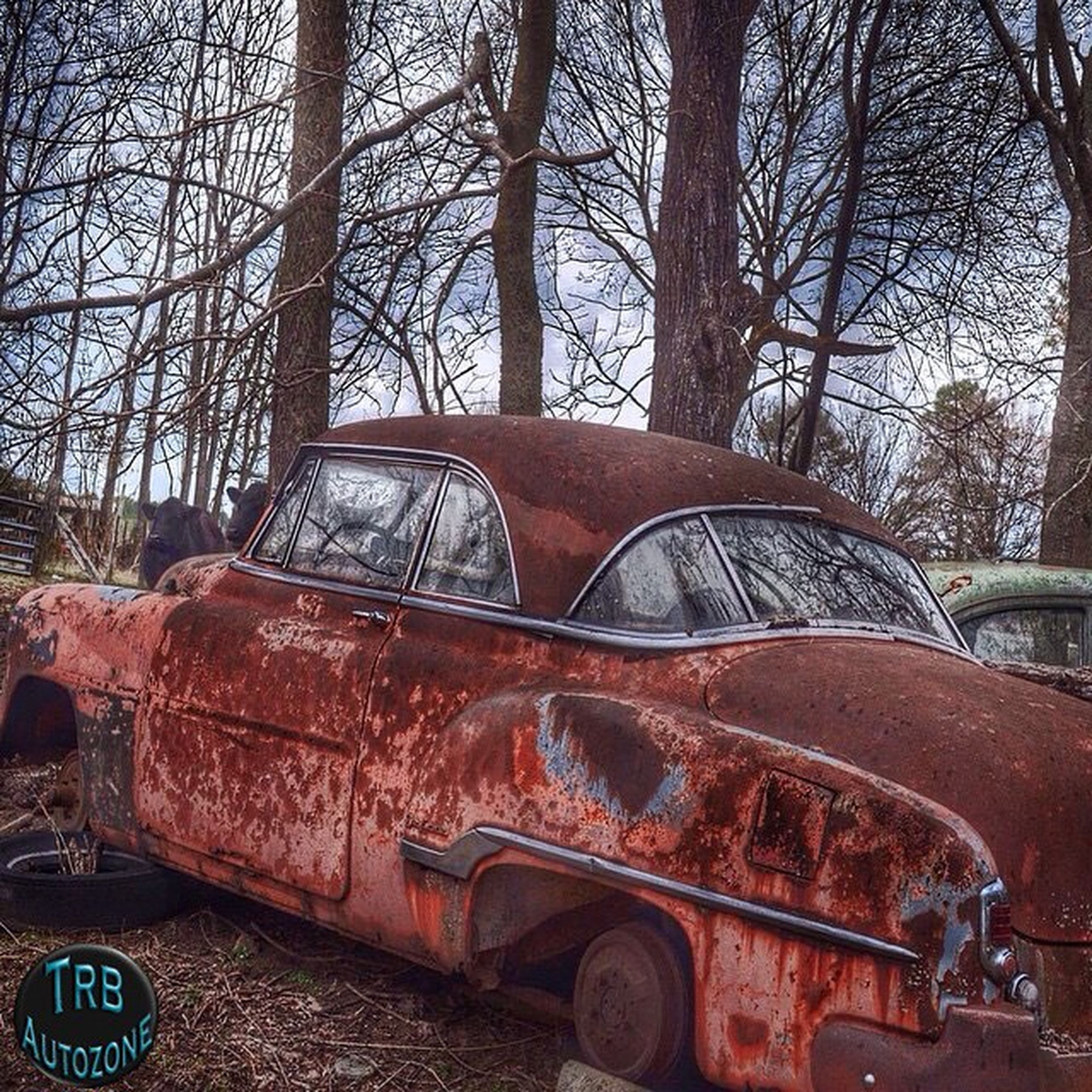 land vehicle, mode of transport, transportation, car, old, tree, old-fashioned, retro styled, part of, close-up, abandoned, obsolete, day, outdoors, no people, cropped, bare tree, stationary, damaged, metal