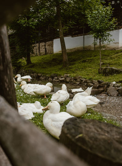 White birds on a land