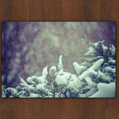 It's snowing today! Snapped this through my window :) #jj #igla #primeshots #instagramhub #instagood #igers #igersmissouri #canon #jj_forum #snow #itssnowing #instaaaaah Canon Igers Jj  Instagood Instaaaaah Instagramhub Jj_forum Primeshots Igla Igersmissouri Itssnowing Snow