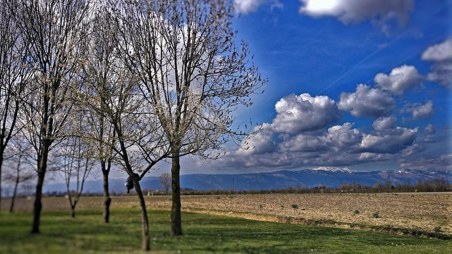 Nature is beautiful! EyeEm Best Shots EyeEm Nature Lover EyeEm Selects EyeEmBestPics EyeEmNewHere HDR Agriculture Bare Tree Beauty In Nature Cloud - Sky Environment Field Land Landscape Nature No People Non-urban Scene Plant Rural Scene Scenics - Nature Sky Tranquil Scene Tree