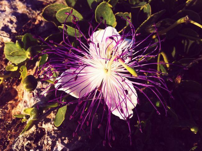 Flower Earth Sunshine Life Nature Green Iloveflowers Colors Sea Light
