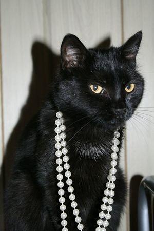 Tobi <3 Cat♡ Catlover Kitty Diva Meow🐱 Kitty