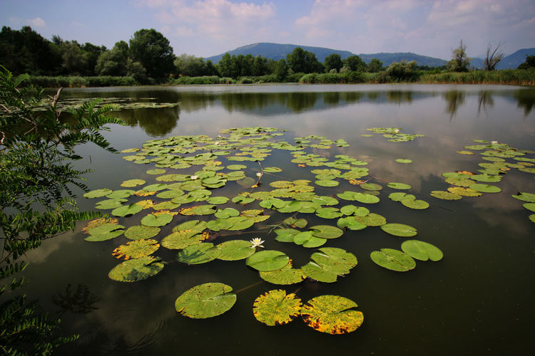 Paesaggio No People Landscape Tranquil Scene Torbiere Water Torbieredelsebino Clouds And Sky Landscape_photography Green Nature Acqua Verde Landcsape Montagne Reflection Beauty In Nature Riflessosullacqua Reflection In The Water Ninfee Water Lily