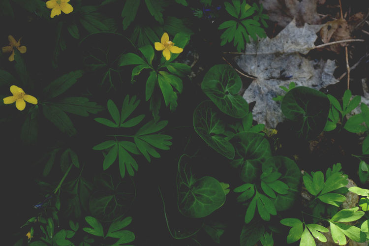 Green Color Leaf Plant Growth Herb Flower No People Nature Indoors  Flower Head Day Yellow And Green Spring Wood Beauty In Nature Twilight Darkness Sunlight And Shadow Tranquility Heat - Temperature Green Color Outdoors