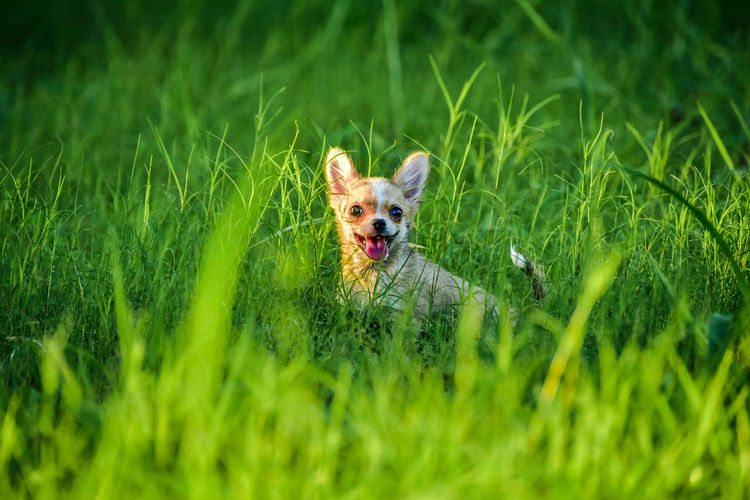 Portrait of dog on grassy field