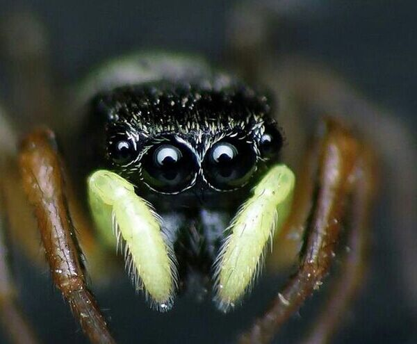 Nature Eyes Taking Photos Spider Macro Macro Photography Jumping Spiders Monster Eyes