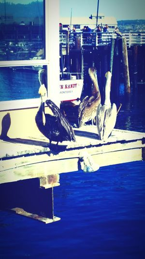 Unbelievably Beautiful Beautiful Nature Artistically Artsy Ocean Monterey Fishermans Wharf