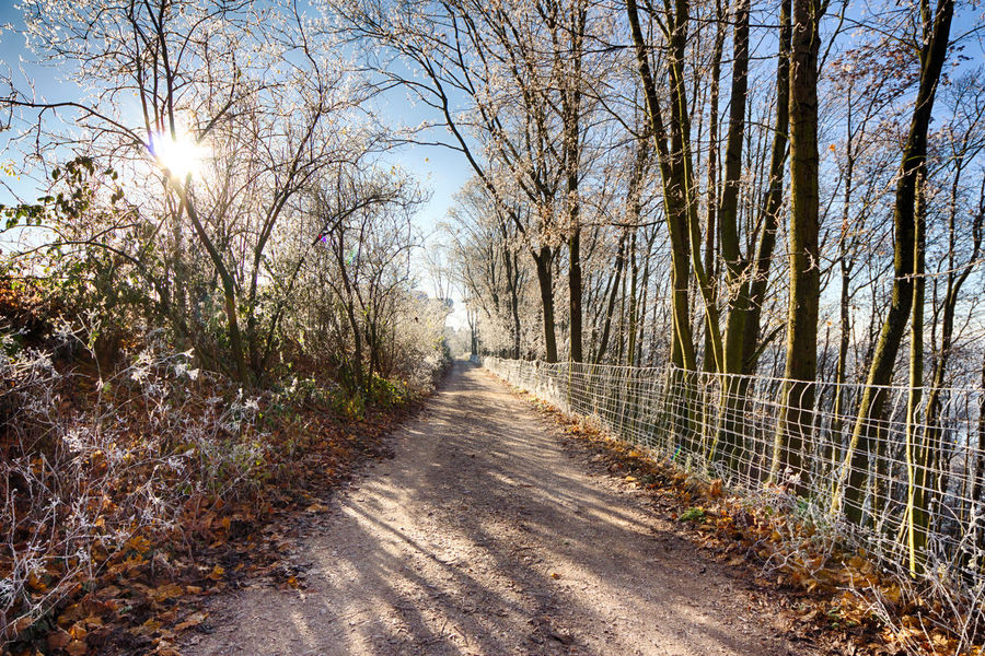 On cold and clear morning near the fortress of Ehrenbreitstein. Beauty In Nature Day Footpath Forest Forst Freshness Hdr_lovers Hdrphotography Hoar Frost Nature No People Sunlight Sunlight The Way Forward Tranquility Tree