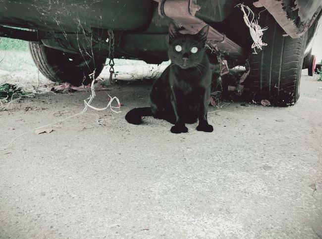 Cat Eyes Black Cat Spiderwebs Cat Looking At Camera Nature Gato Negro Car Rust Concrete Domestic Animal Debris Cat Lovers Cat Watching