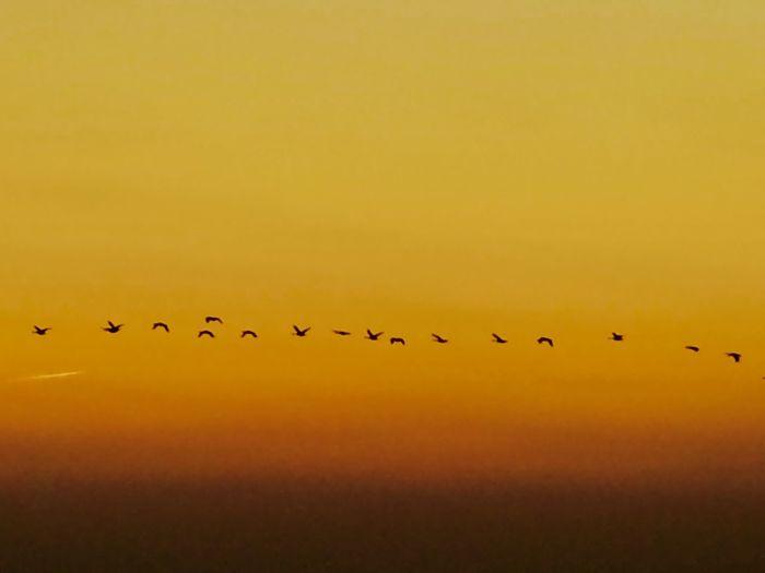Birds flying in sky during sunset