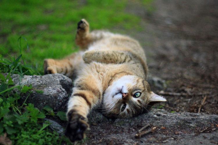 Cat Cat♡ Lazy Catstagram Catlover Catlovers Meow Kot Kitten Cat Lovers