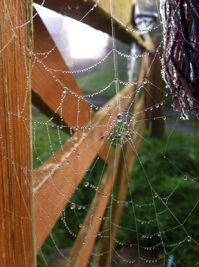 Cobweb Gate Nature Photography