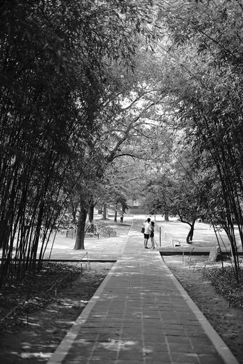 Beauty In Nature Black & White Blackandwhite Leisure Activity Lifestyles Love Nature Park The Way Forward Tree