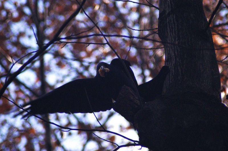 Tree Bird One Animal Birdontree Tokyonature 駒場東大前 Blackbird Inthepark EyeEm Nature Lover Animal Themes Animals In The Wild EyeEmNewHere