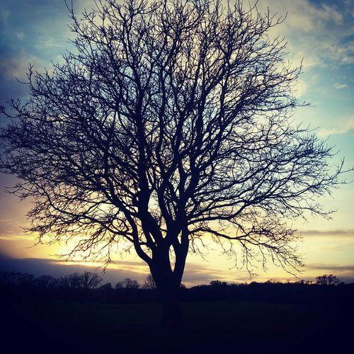 EyeEmNewHere Nature Natural Beauty Tree Trees No People Beauty In Nature Malahide Castle Malahidecastleandgardens