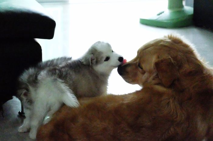 Dad and baby Dog Pets Domestic Animals Animal Themes Togetherness Mammal Indoors  Close-up Day Home Interior