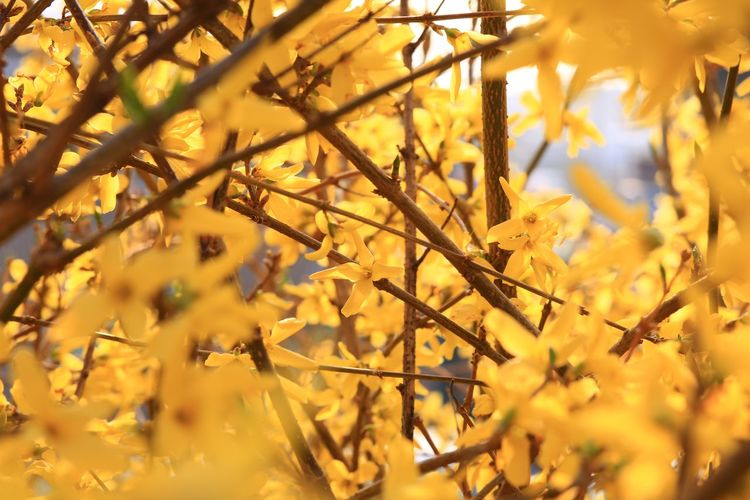 Close-up of yellow flowering plant during autumn