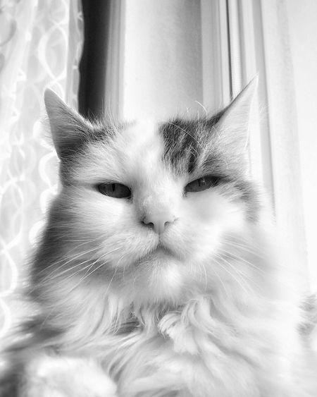 Hexe Hexe-Baby Hexle Cat Catphoto Black & White Cutestcatintheworld Blackandwhitephotography Cutestcatever Cat♡ Catphotography Blackandwhite Photography