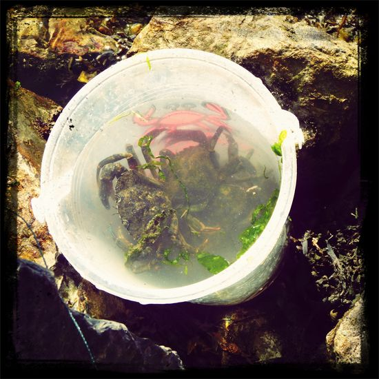 The first of many. Crabs Parrog Newport, Pembrokeshire