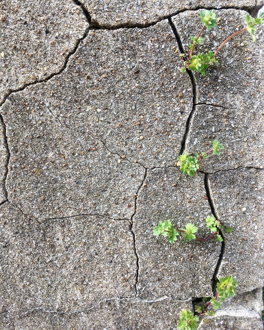 cracked, growth, no people, plant, nature, day, textured, close-up, outdoors, beauty in nature, full frame, fragility, wall - building feature, leaf, weathered, plant stem, concrete, gray, vulnerability, green color, cement